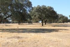 Los campos y el ganado están esperando las lluvias