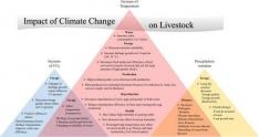 La producción ganadera es responsable de un 14.5% de las emisiones de los gases de efecto invernadero.