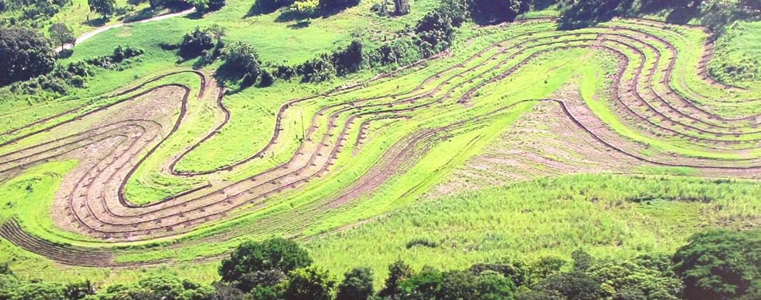 Petición de ofertas para experto en Agricultura Regenerativa