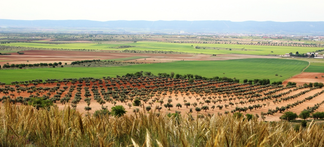 Extremadura llena de oportunidades agrícolas