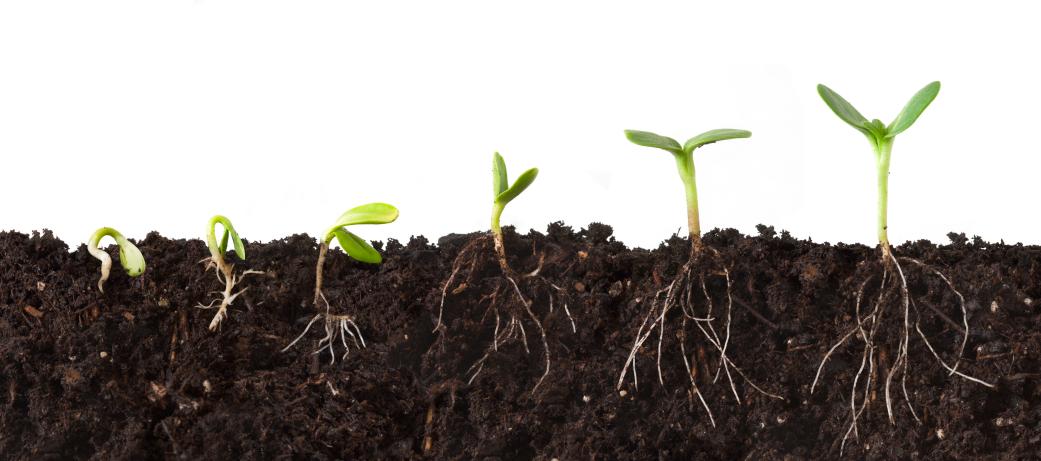 Mycorrhiza - Bacterias del suelo