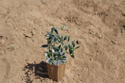 Volterra trabaja en equipo para revitalizar tierras en Arganda del Rey