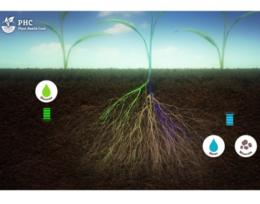 El suelo es un organismo vivo