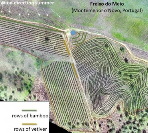 Diseño integral finca agroecologica con plantas de apoyo bambú y vetiver